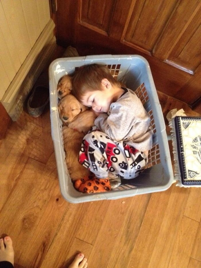 boy-snuggling-with-retrievers-in-a-basket