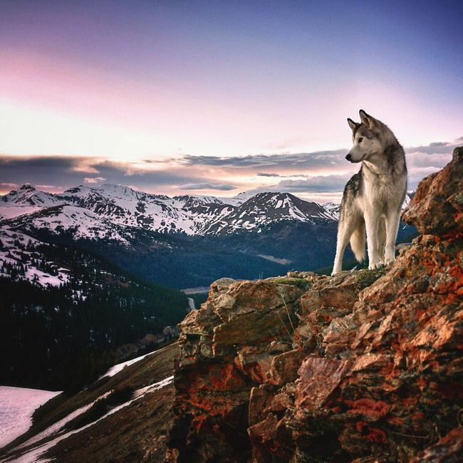 Dog enjoying the view from a hill top