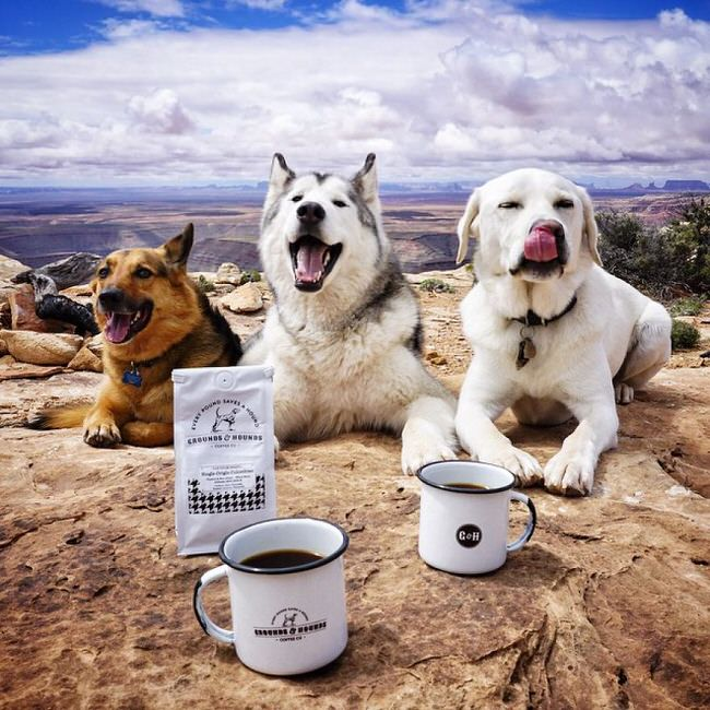 Dogs enjoying coffee