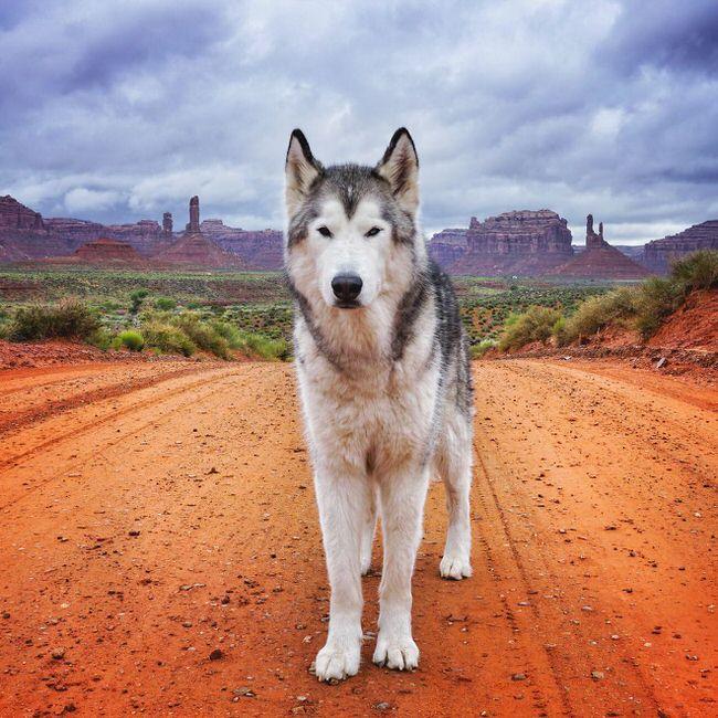 Dog posing on a trip