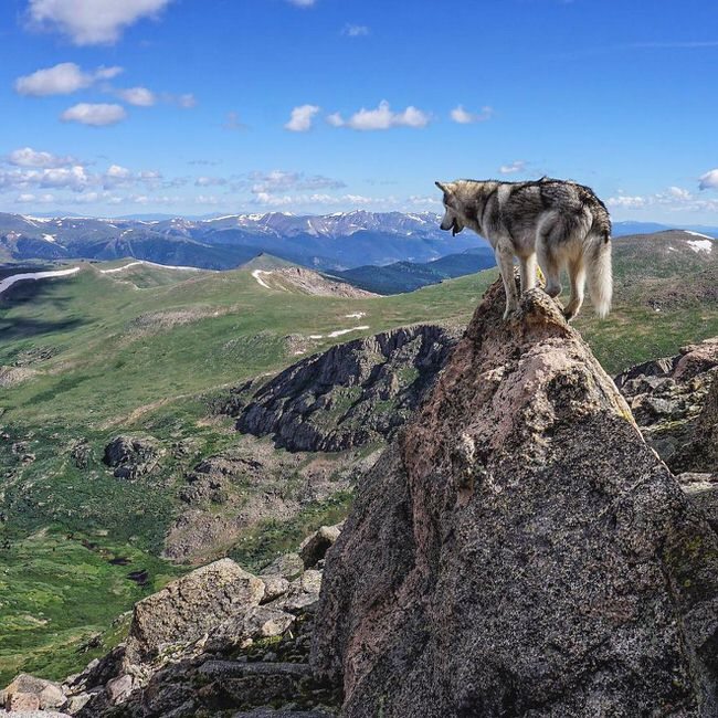 Dog on the hill top