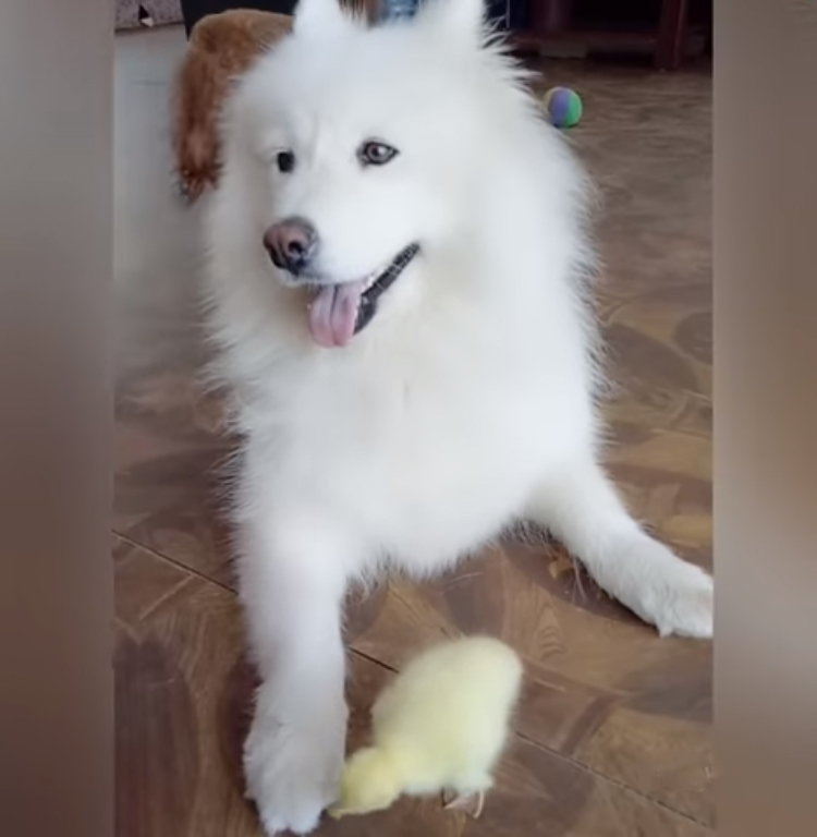 fluffy-dog-playing-with-baby